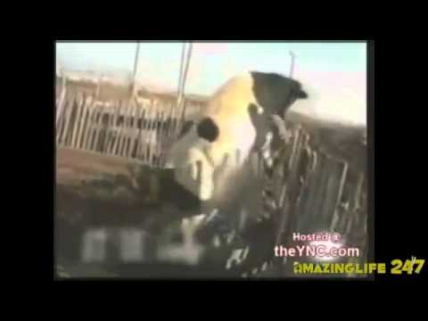 Horny Cows Hot Video (For Adults Only)