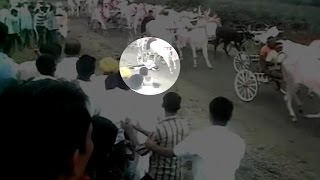 Watch- Man's miraculous escape after being run over by bullock carts