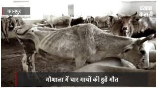गौरक्षा के ढोंग का पर्दाफाश, गौशाला में भूख से तडफ़कर चार गायों की मौत