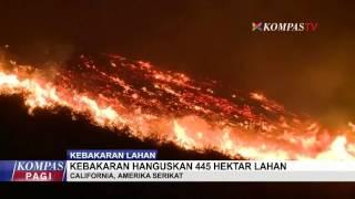 Kebakaran Hanguskan 445 Hektar Lahan