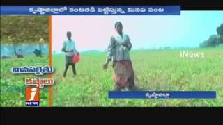 Black Gram Cultivation Farmers In Krishna District suffer Huge loss | iNews
