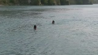 सतलुज में नहाते वक्त फिसला पैर,  2 युवक डूबे