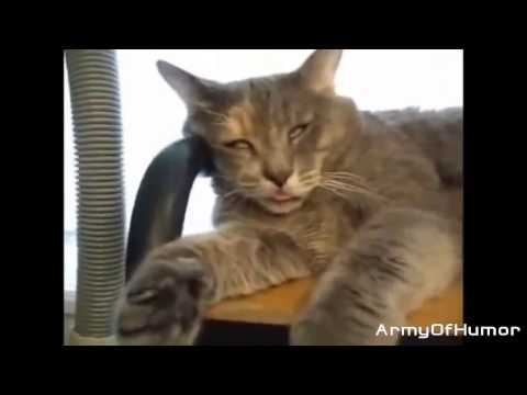 Image of: Whatsapp Funny Cats 2014 Best Funny Cats 2014 Compilation New January Crazy Angry Funniest Videos Watch Best Husband Wife Funny Video video Id 371d959f7f31ce Veblr