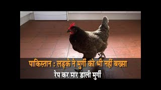 पाकिस्तान - लड़के ने मुर्गी को भी नहीं बख्सा, रेप करके मार डाली मुर्गी