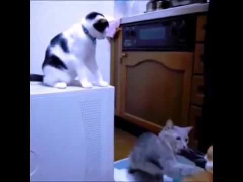 Funny Cat Smack   Talking Cat videos   Funny Cat videos