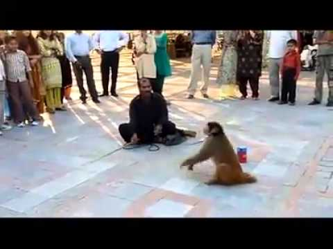 Monkey Show - Best Funny Video