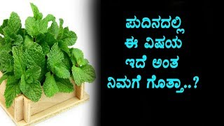 Secrete Health Benefits of Mint (Pudina) | Kannada Health Videos | Kannada TV