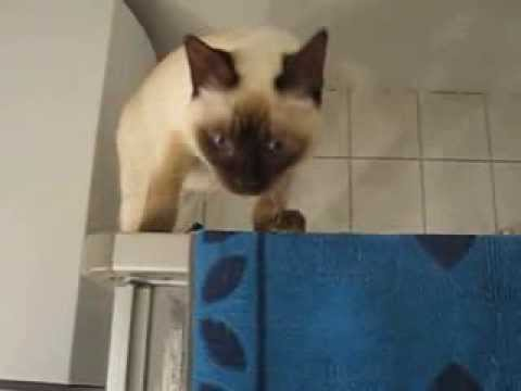 The FUNNY cat FAILS 2014 funny videos clips FUNNY ACCIDENT VIDEOS - Funny cat falling - cat fail funny