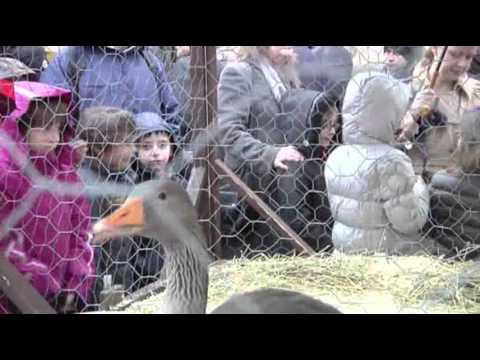Raw- Animals Blessed in Vatican City News Video