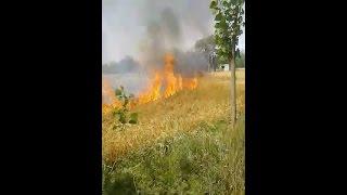 तैयार खड़ी गेंहू की फसल में लगी आग, सदमे में किसान