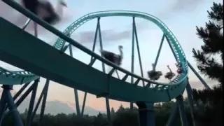 Menakjubkan Atraksi Hewan Hewan Lucu Gajah Terbang