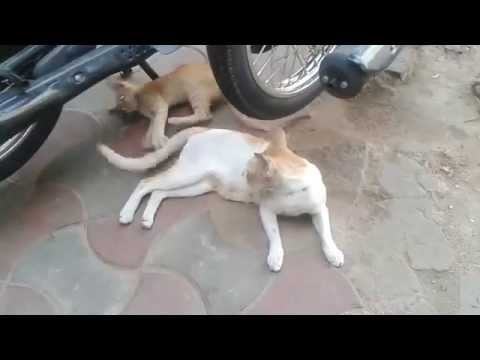 Try Not To Laugh !! Pets Funny Playing -  Amazing Videos