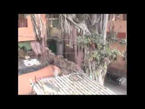 Raw- Leopard on the Prowl Panics Indian City News Video