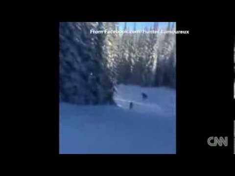 North America Snowboarders take on moose News Video