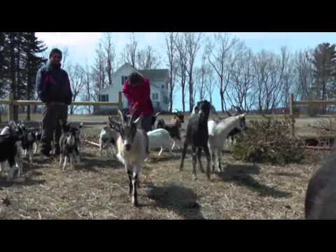 Vermont Goat Meat Gives Refugees Taste of Home News Video