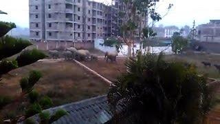 Video - जब शहर में घुसा जंगली हाथियों का झुंड