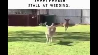 Funny Video - People on weddings