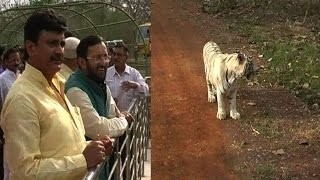 Environment Minister Prakash Javadekar inaugurates tiger safari in Madhya Pradesh - News Video
