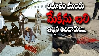 Airline Slammed for Sacrificing Black Goat before Flying at Pakistan Airport || Rectv India