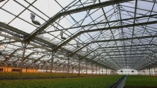 Giant Rooftop Greenhouse Sprouts in Chicago News Video