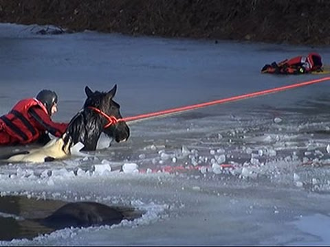 1 Horse Dead, 1 Rescued After Fall Through Ice News Video
