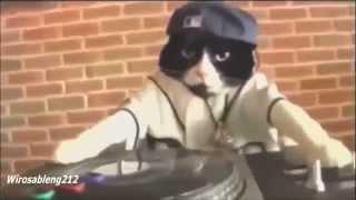 Video Lucu  -  DJ Kucing  (House Musik Dugem)