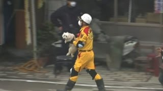 Raw- Dog Rescued from Taiwan Earthquake Rubble News Video