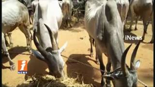 AP PCC President Raghuveera Reddy Protest At MRO Office Over Cattles Grass | Anantapur | iNews