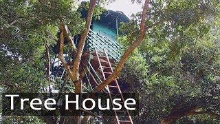 Tree House -  live in forest - best way to refresh your mind