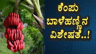 Secrete benefits of Red Banana | Kannada Health Tips | Top Kannada TV