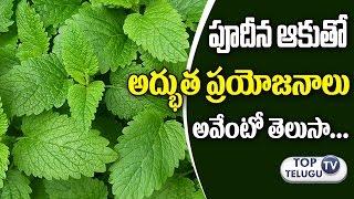 పుదీనా ఆకుతో ఉపయోగాలు Health Benefits of Mint Leaves (Pudina) In Telugu | Health Tips | Top TeluguTv