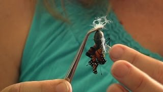 Monarch Butterflies Getting Boost from Drought