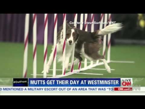 Mutts get respect at Westminster News Video