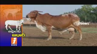 BJP Govt Agrees For Aadhar Card to Cows To Prevent Cow Smuggling   iNews