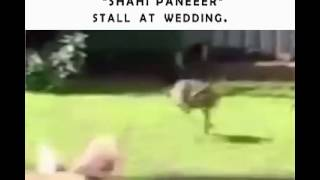 What Happens At Indian Wedding - Funny Video
