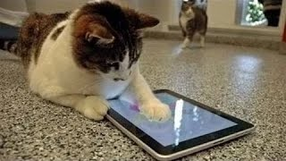 Video Lucu - Kucing Main Ipad