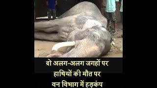दो अलग-अलग जगहों पर हाथियों की मौत पर वन विभाग में हड़कंप