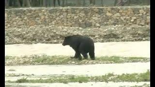 भालू का रेस्क्यू ऑपरेशन Live, कई घंटों तक मची अफरातफरी