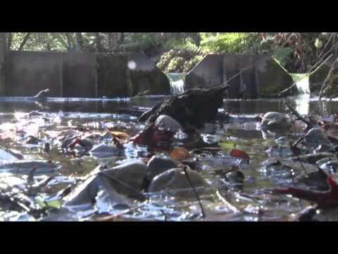 California Drought Has Communities in Crisis News Video