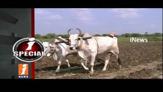 Farmers Suffering With Huge Losses To ProdueYield Crops | iSpecial | iNews