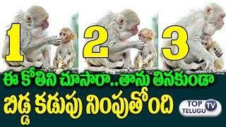 తాను తినడం మానేసి బిడ్డ కడుపు నింపుతోంది   Monkey giving food to her baby   Interesting Telugu News