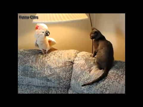 Funny video - Funny Animal - Funny Cat and Parrot